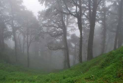 A landscape photograph showing fog and trees