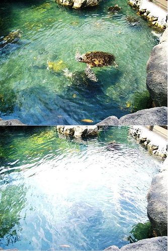 A photo shosing the effect that a polarizing filter has on reflections in water