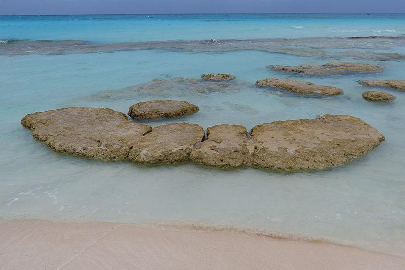 Photograph of stromatolies at Highborme Cay