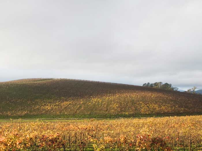 A photograph of the same hill depicted in Bliss. The time of year and weather conditions make this photograph less aestetically pleasing than the Chuck O'Rear image.
