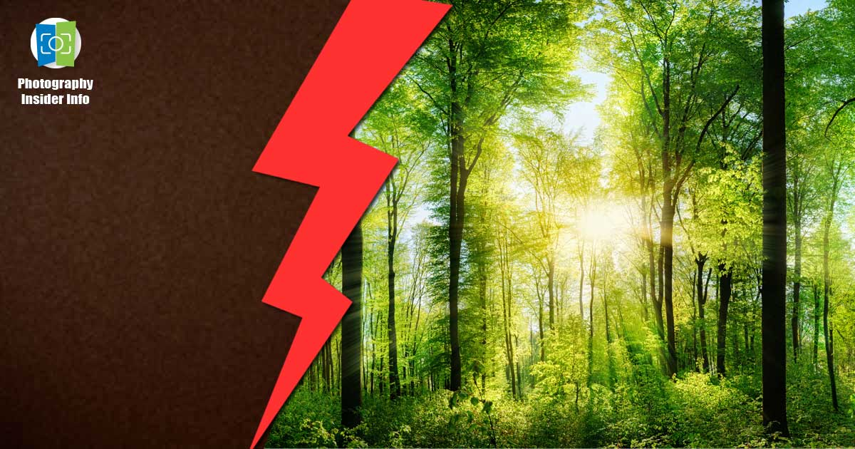 One side of the image is just an indistinct nothingness, the other a bright, colorful forest scene